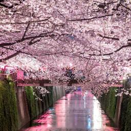 Bilderesultat for japan
